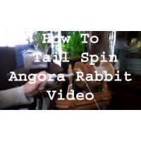 Tail Spin Angora Rabbit