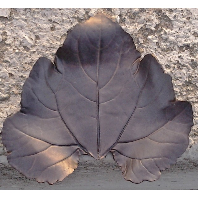 grape leaf